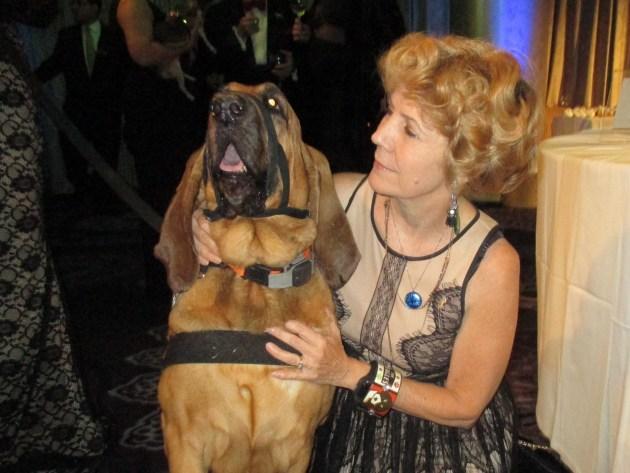 Glory, Search & Rescue Hero Dog (MargieBarron)