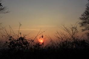 Coucher de soleil sur la jungle.