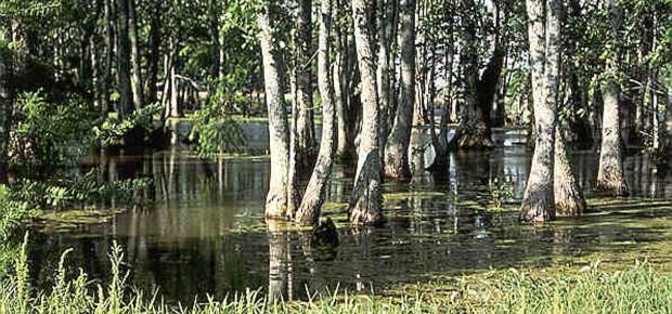 Blessings of Wetlands