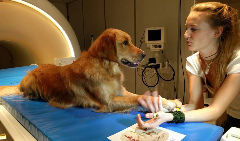 Los perros, como los humanos, distinguen las palabras y la entonación