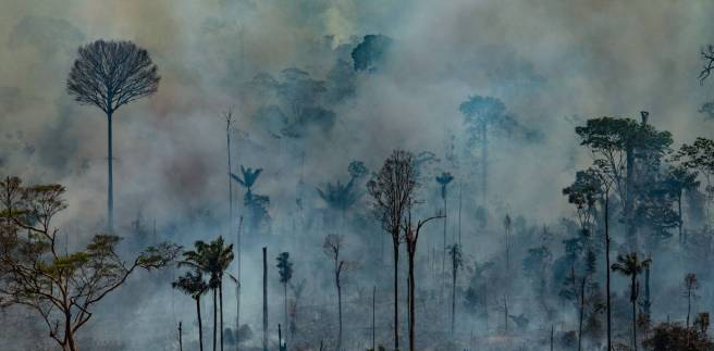 Image result for amazonas incendio