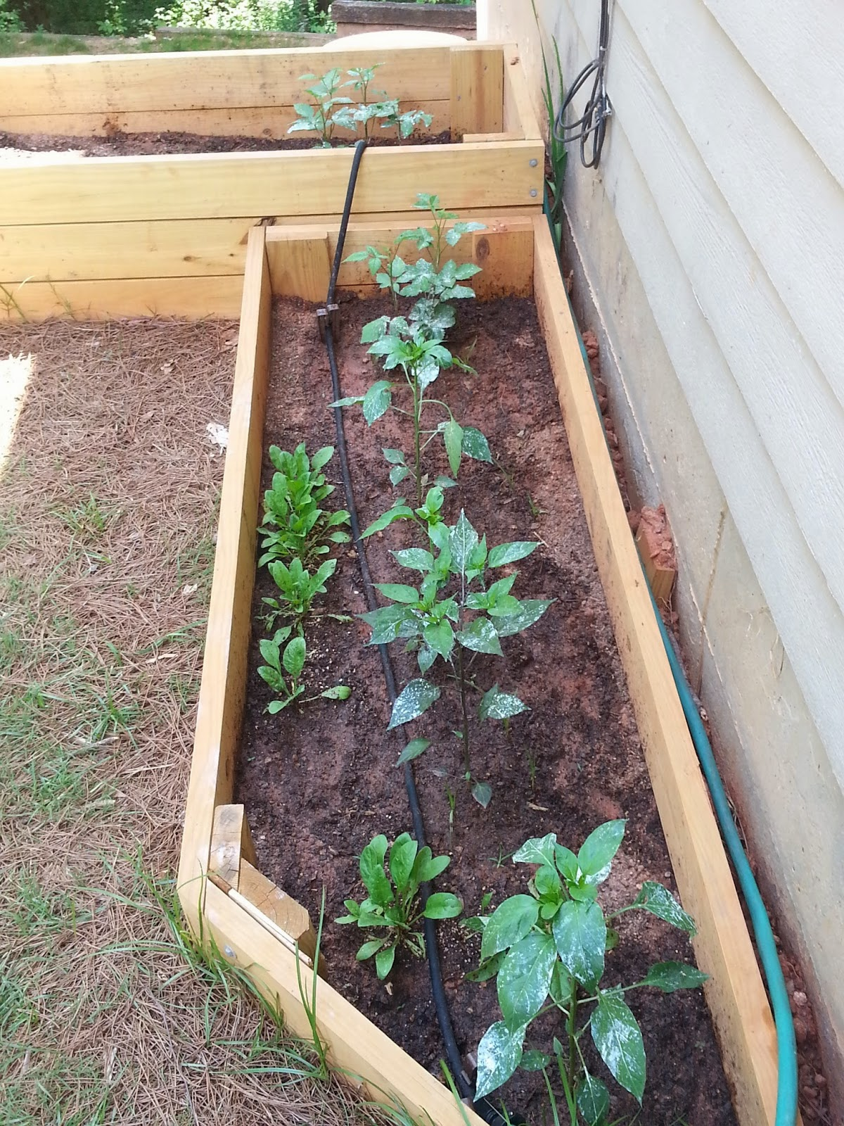 Diy Soaker Hose Irrigation Deeply Rooted