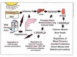 vitdmetabolism