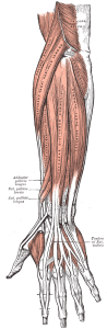 lateralepicondyle1