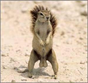 squirrel-nuts-1