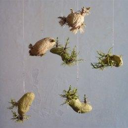 Space Potatoes