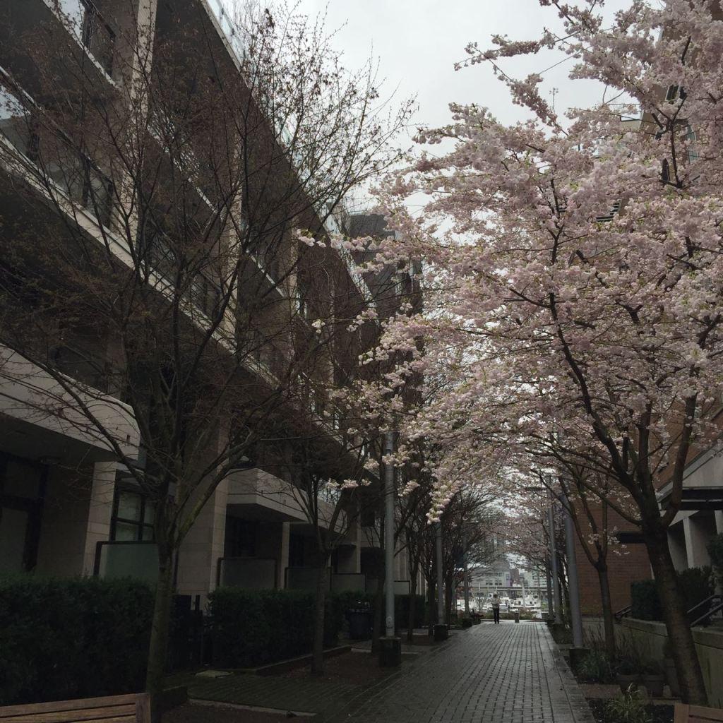 Sakura time!: Cherry blossom prints