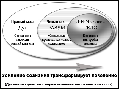 Рис. 6. Холархический мозг в духовном развитии.