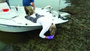 Costas de Luisiana siguen sin ranas e insectos a tres años del derrame de petróleo