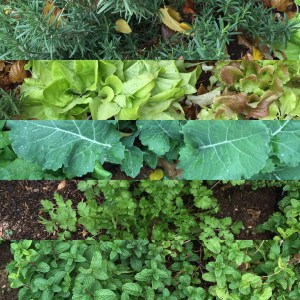 A montage of the green garden.