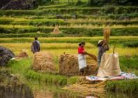 Tanah Toraja-10-2