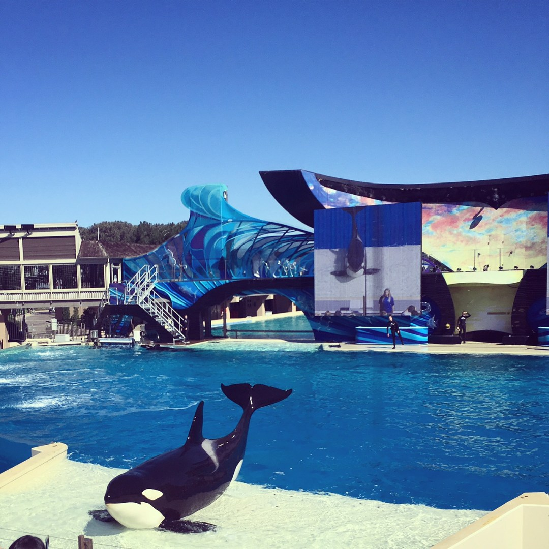 San Diego Family Vacation : SeaWorld