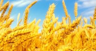 Ensino Bíblico: 19 Versículos sobre a Prosperidade