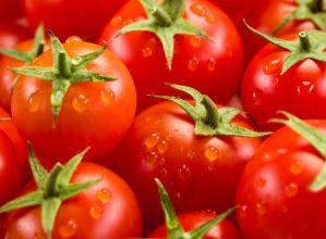 Tomate-dastaketa  urriaren  19an