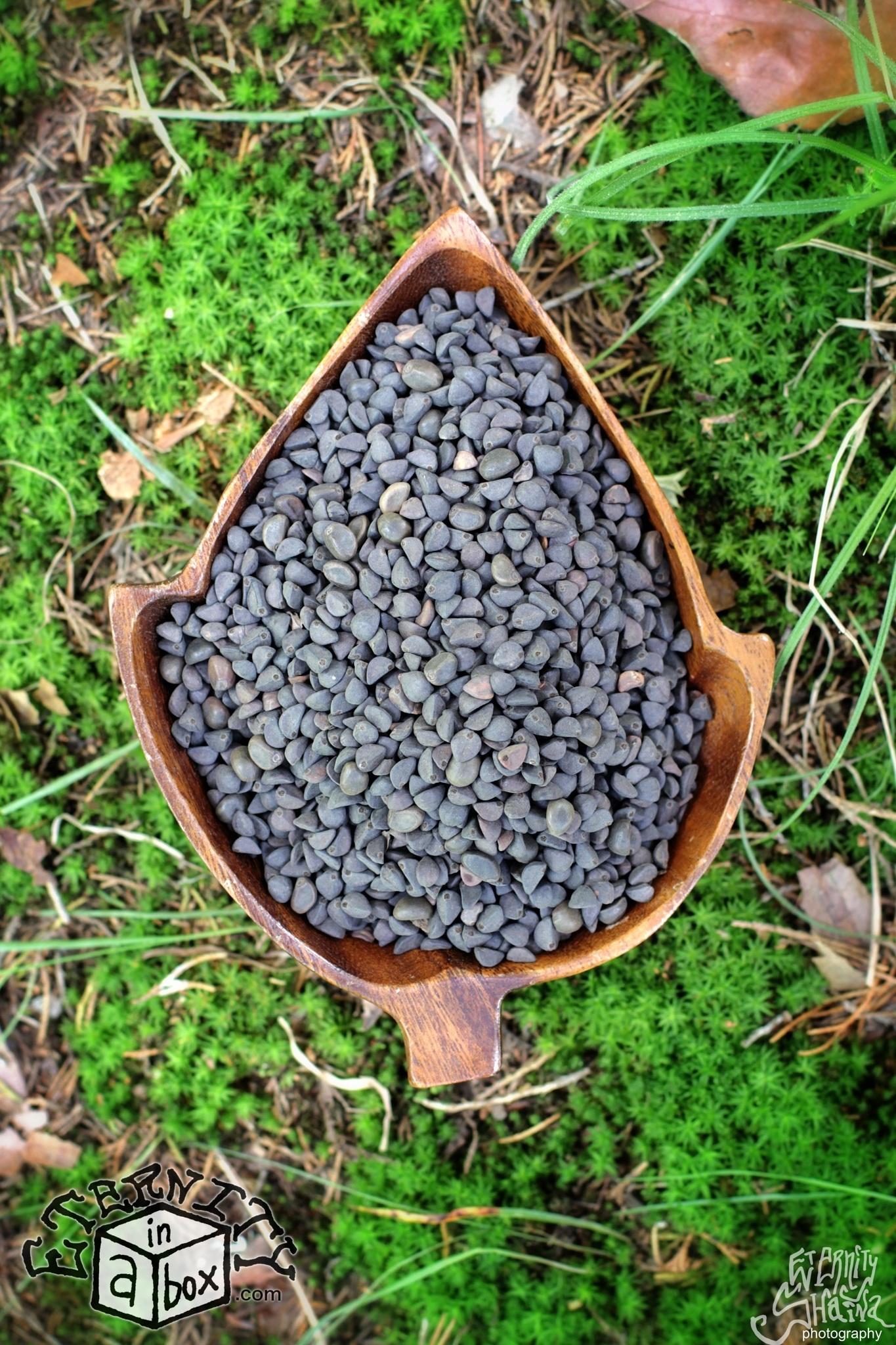 Nice Heavenly Blue Morning Glory Seeds Heavenly Blue Morning Glory Seeds Eternity Morning Glory Seeds Reddit Morning Glory Seeds Erowid houzz 01 Morning Glory Seeds