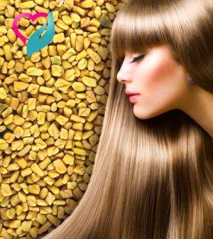 fenugreek hair