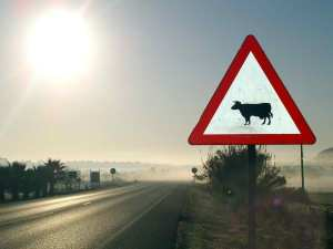 "<a href=""http://akenator.deviantart.com/art/Danger-cow-signal-in-the-fog-166643929"">Danger, cows ahead</a> CC BY-SA akenator"