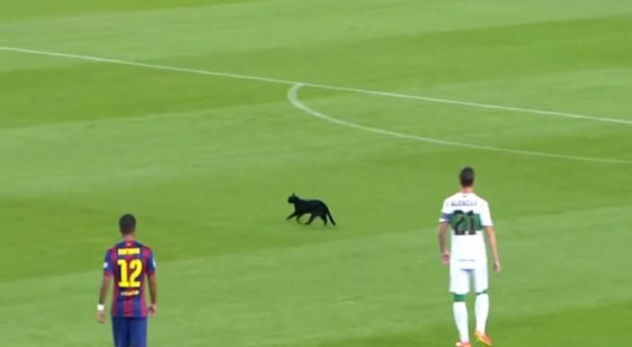サッカーグラウンドにネコ