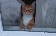 帰りを待つ猫