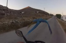 オウムとバイクのレース