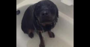 シャワーを浴びる犬