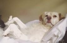 世界で一番の犬