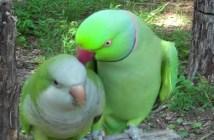 鳥の掛け合い