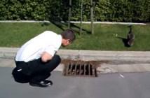 排水溝に落ちたアヒルを助ける男性