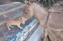 仲良しなロバと猫