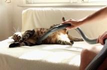 掃除機好きの猫