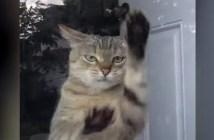 窓をひっかく猫