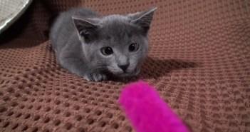 寄り目の子猫