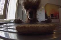 クッキーを食べたい犬