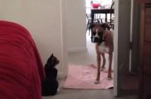 猫パンチが恐くて進めない犬