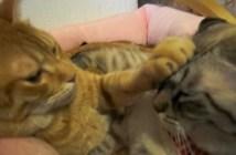 押さえる猫