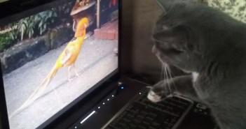 かまえる猫