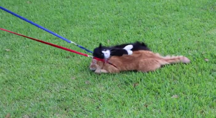 他の猫に乗っかる猫