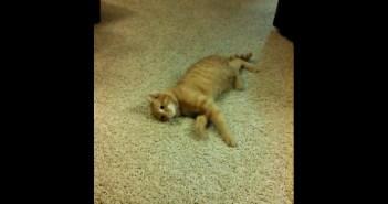 横になりながら近づく猫