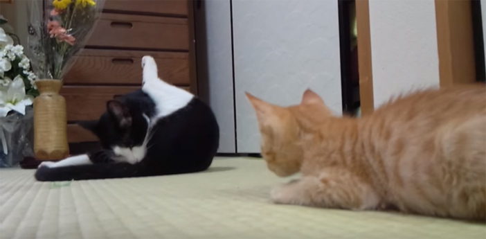 大人猫の隙をうかがう子猫
