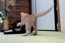 世界最弱の猫パンチ