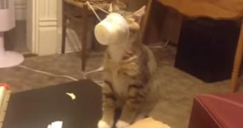 チーズを食べる猫