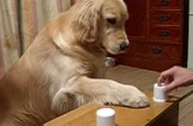 おやつどっちに答える犬
