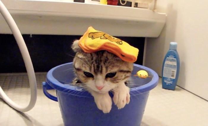 バケツのお風呂に入る子猫