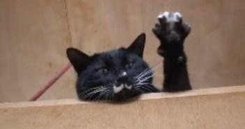 名前を呼ばれると返事する猫