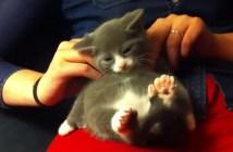 肩をもまれる子猫
