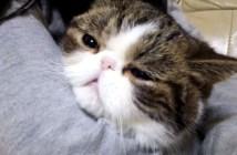 ゲゲゲの鬼太郎を歌う猫
