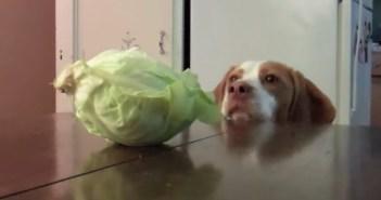 盗み食いする犬