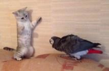 オウムに追われる子猫