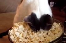 ポップコーン猫