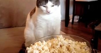 ポップコーンに興味津々の猫